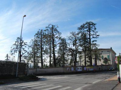 Capitozzatura: parco storico orrendamente mutilato
