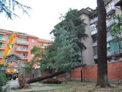 Intervento di urgenza per alberi caduti