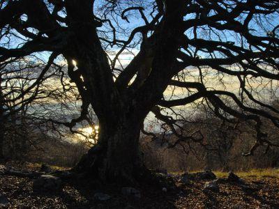Grandi alberi
