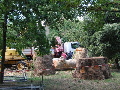 Cantiere abbattimento alberi